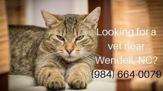 Vets Near Me | Vets Wendell, NC (984) 664-0079
