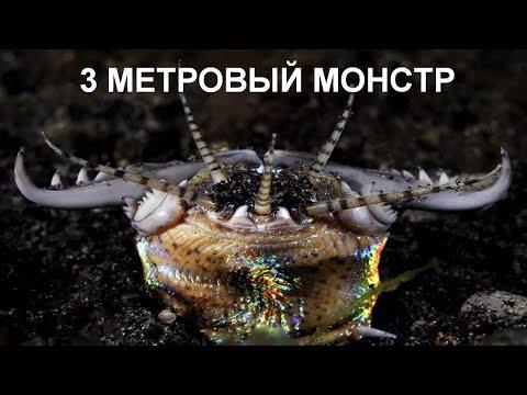 Огромный червь из глубин океана. Он затаскивает своих жертв под землю!