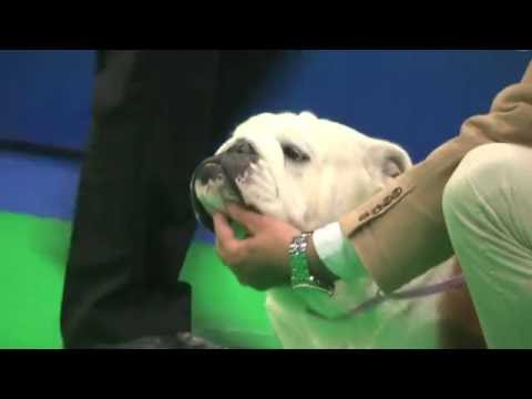 City of Birmingham Dog Show 2016 - Utility group FULL