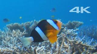 Sony 4K Demo: Beautiful Sea in Okinawa