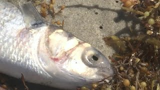 Tests confirm red tide on Space Coast