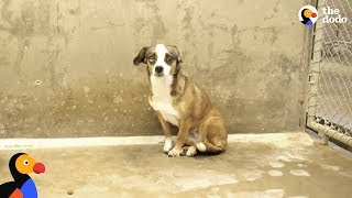 Download Scared Dog Never Wagged Her Tail Until She Met Her Foster Dad - BLOSSOM | The Dodo Mp3 and Videos