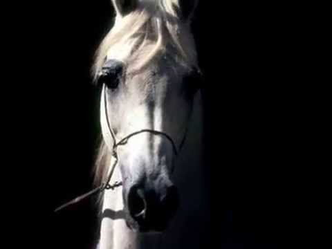 Zuljinah Horse - YouTube