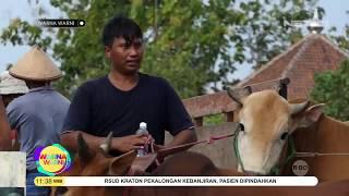 Puluhan Warga di Gunugkidul Yogyakarta Positif Terjangkit Antraks - Warna Warni
