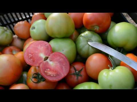 Вопрос: От чего в помидорах белые жесткие прожилки?