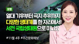 [2019 주간문화예보] 11월 넷째 주_여행 편(11…