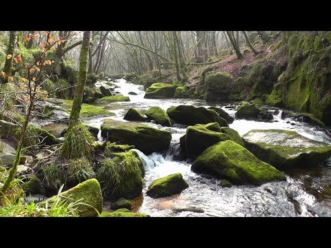 Bird Sounds Relaxation : A Relaxing Video For Sleep, Stress Relief, Meditation & Study