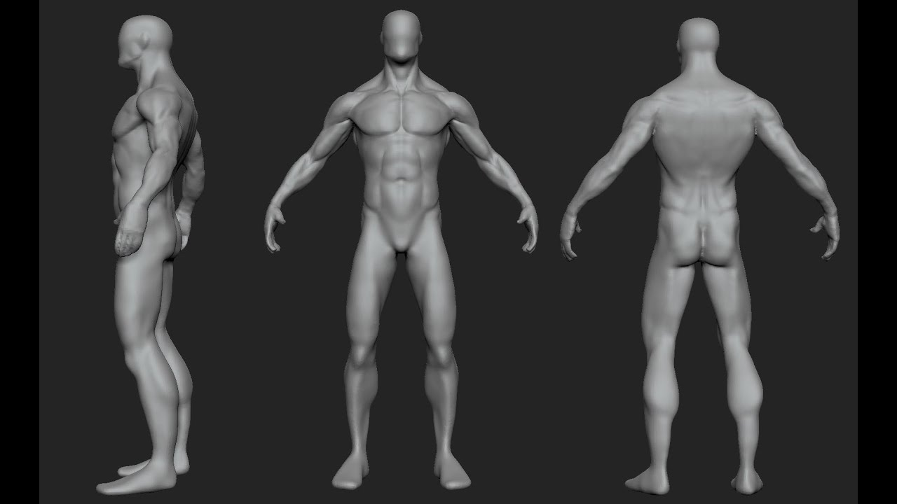 Generic Male Anatomy Study - YouTube