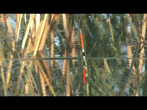 Рыбалка. Карп , карась в камышах на поплавок.  My fishing.