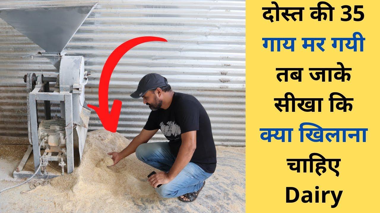 सच्चे मन से बतायी विक्रम सर ने सारी बातें-Dairy farming in India feed and disease management