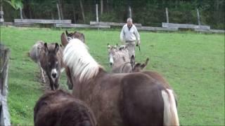 Praktizierter Tierschutz / Dr Franz Joseph Plank in Esternberg
