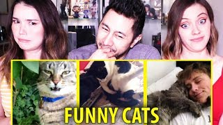 FUNNY CATS 2015 | Vine Compilation | Best Vines | Try Not To Laugh | Reaction!