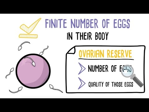 Basics of Testing Egg Quality and Quantity from US Fertility Network