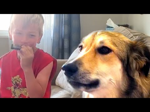 MORE KIDS AND ANIMALS! Funny Animal Videos