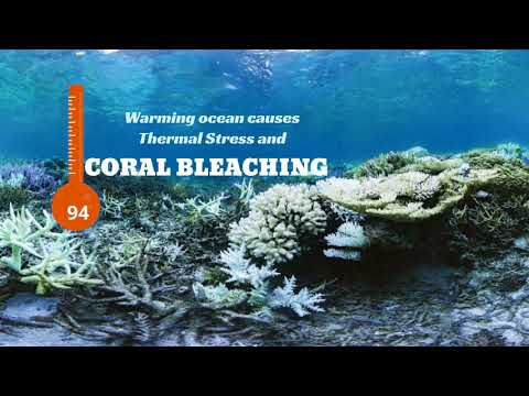 HOW DOES CLIMATE CHANGE AFFECT CORAL REEF ECOSYSTEMS