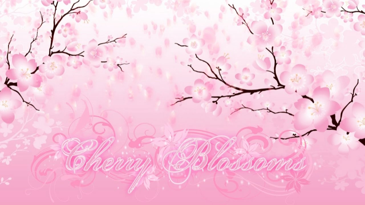 Pink Cherry Blossom Wallpaper Hd Falling Petals Cherry Blossom Flourish Background Youtube