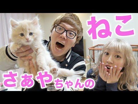 さぁやちゃんの赤ちゃん猫『アルくん』と初対面!【子猫】
