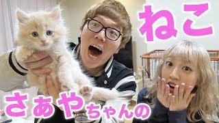 さぁやちゃんの赤ちゃん猫『アルくん』と初対面!【子猫】 thumbnail
