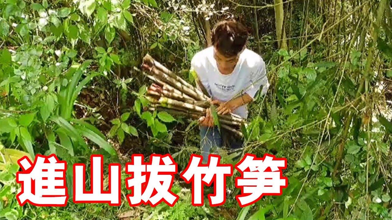 這樣把竹筍太過癮了,鑽進竹林就不想出來,拔竹筍的聲音啪啪響【小江視頻】