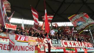 Fc Bayern München Ultras (Schickeria München & Südkurve & Red Munichs)