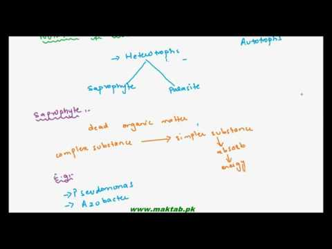 FSc Biology Book1, CH 6, LEC 6: Mode of Nutrition and Respiration in Bacteria