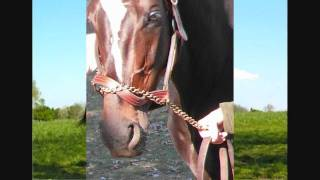 Zenyatta ~A Very Special Love Song 7-25-11 Latest pictures