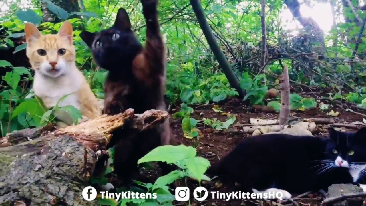Feral cats frolicking in the Happy Forest - TinyKittens.com