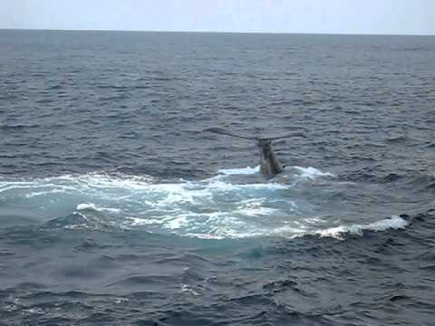 Whale watchin offshore Angola.AVI
