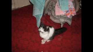 Самые хорошие моменты из жизни кота Гурмэ!