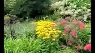 Perennials For Constant Colour In Your Flower Beds