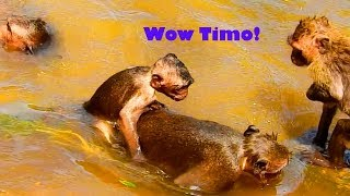 Funny Baby Timo Riding On Jack Back While Swimming In Water, Really Lazy Timo,Time Bathing