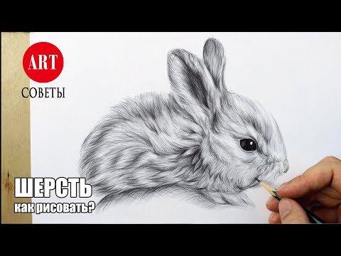 Как рисовать шерсть животных карандашом. Делюсь секретами.