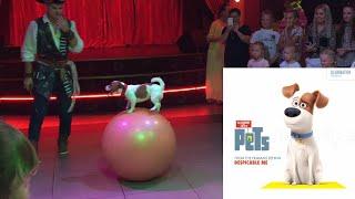 Макс из мультфильма Тайная жизнь домашних животных смотрит трюки собачки маленький Макс артист vlog