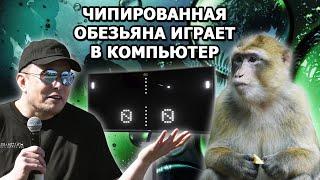 Илон Маск: о прорыве Neuralink в чипировании обезьян. Люди - следующие?