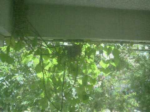 รังนกหน้าบ้าน มทร.วังไกลกังวล100_9415.MOV