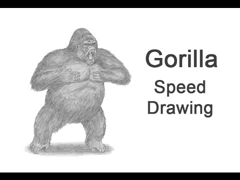 Gorilla (Aggressive Display) Time-lapse (Speed) Drawing