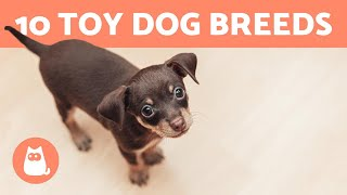 Top 10 TOY DOG BREEDS  Miniature & Dog Sizes