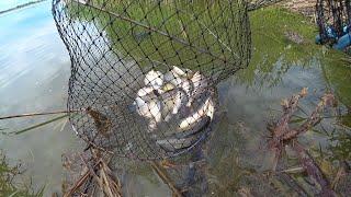 РЫБАЛКА БЕШЕНЫЙ КЛЕВ КАРАСЯ Рыбалка на поплавочную удочку фидер карась убийца рыбалка fishing