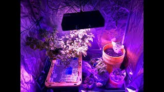 2018 Super Hot Peppers Growing Season - Ep. 01 - Starting Seeds & New LED Light