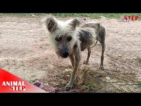 Abandoned Starving Dog Is Rescued but Her Life Is Really Sad