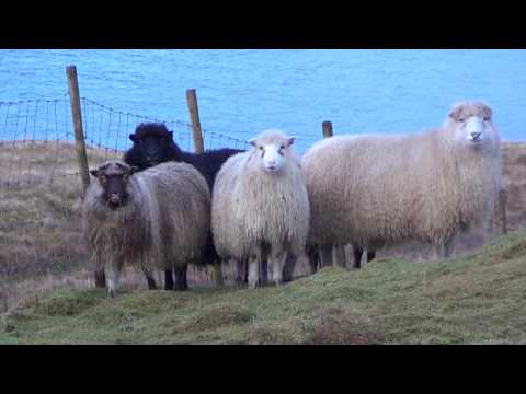 Faroe Islands Vacation 2014 | The Rasmussens