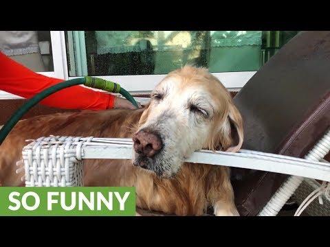 Senior dog fall asleep during bath time