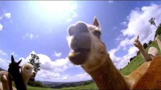 cgu insurance bill the alpaca breeder