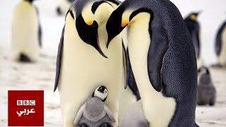 سر عدم تجمد طيور البطريق في القطب الجنوبي