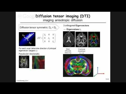13.1 - Blood Flow & Diffusion in MRI