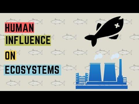 IGCSE BIOLOGY REVISION [Syllabus 21] Human Influence On Ecosystem