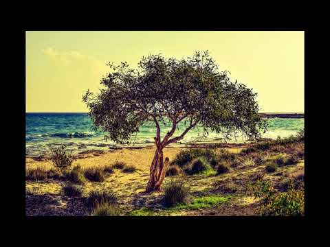 Olive tree karaoke