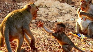 Baixar Great!bravo baby Janet hit young monkey that take her food,so strong baby!