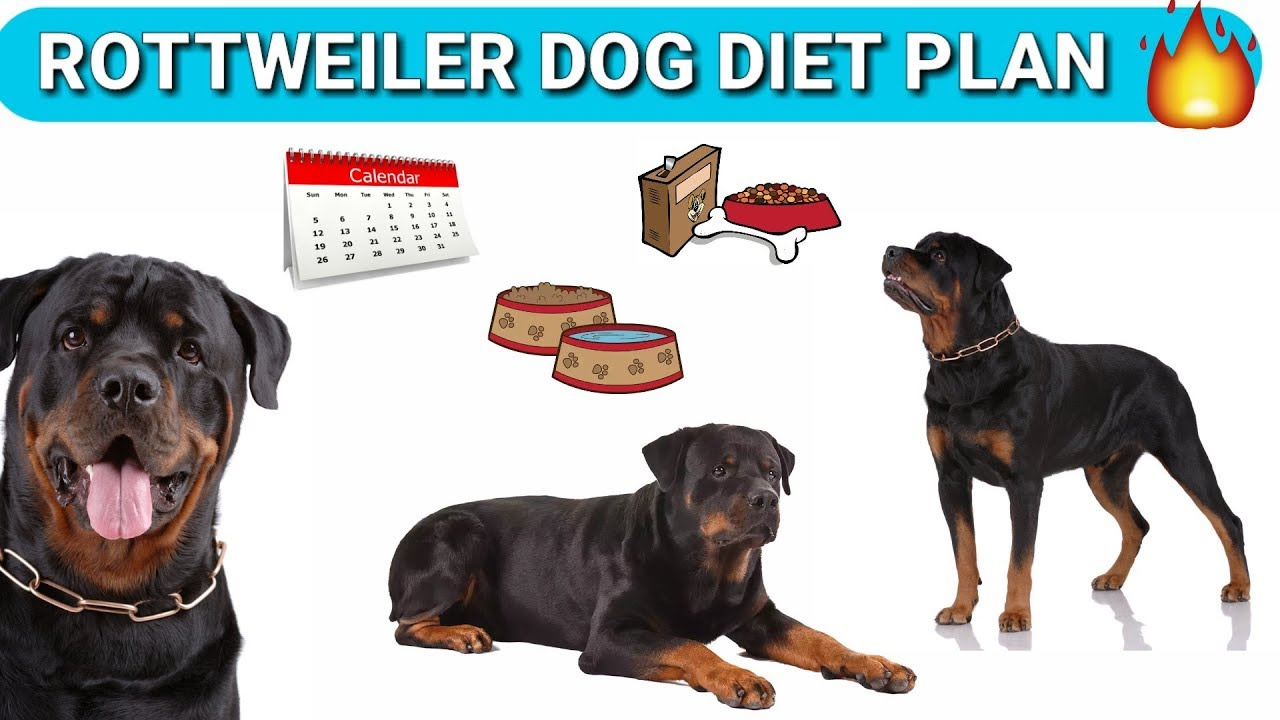 Rottweiler T Chart