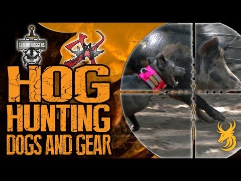 EXTREME Hog Hunting - Hog Hunting Dogs And Gear